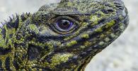 Dinosaurus Mini Ternyata Ada di Indonesia, Bagaimana Bentuknya?