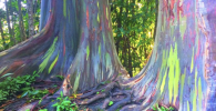 Hutan Pelangi di Bondowoso, Indahnya Kayak Editan!
