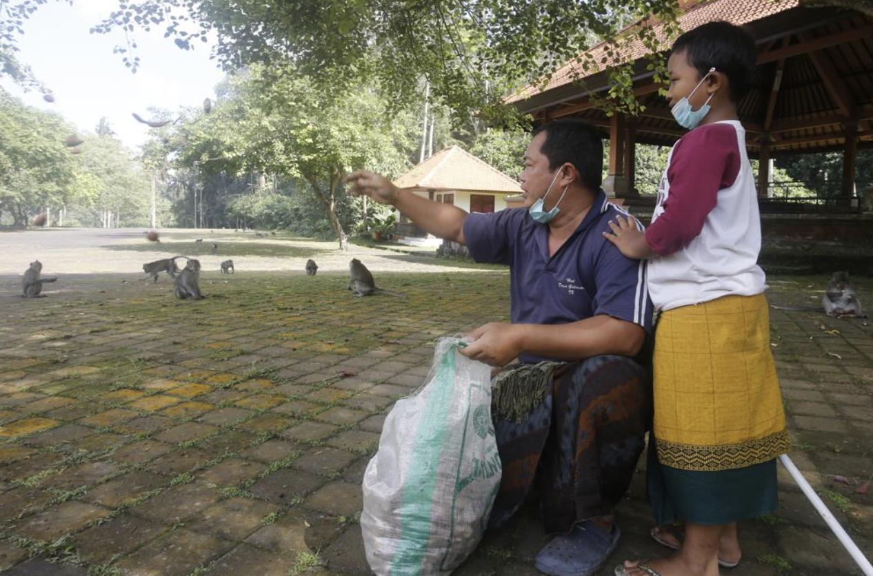 Sepi Turis, Monyet di Bali Kelaparan dan Cari Makan ke Rumah Warga