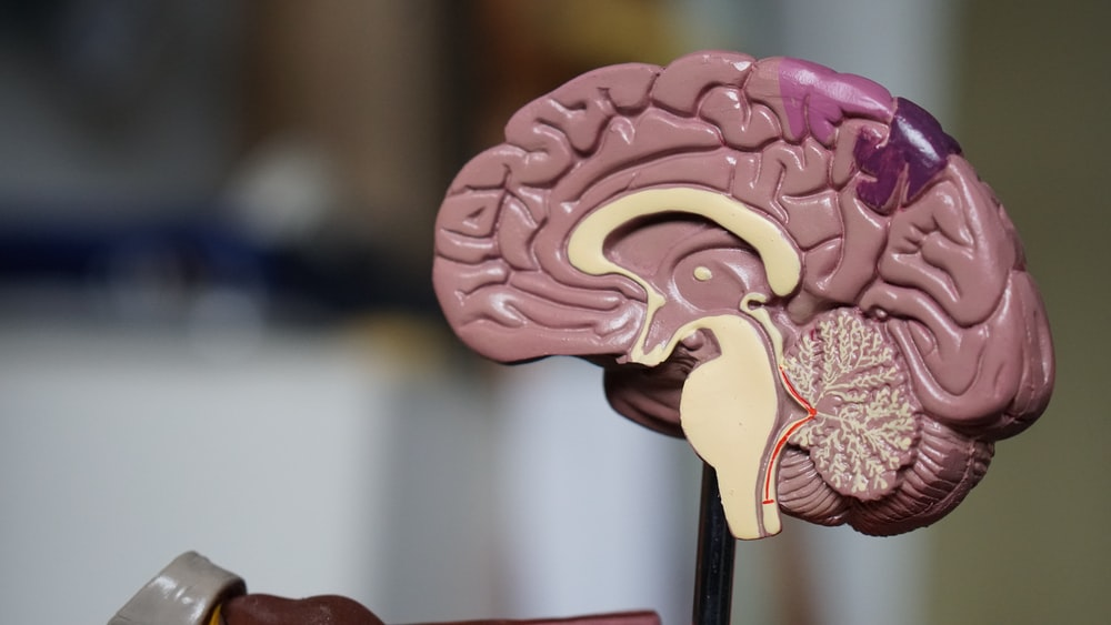 Samsung Mau 'Copy Paste' Otak Manusia ke Chip SSD, Memang Bisa?